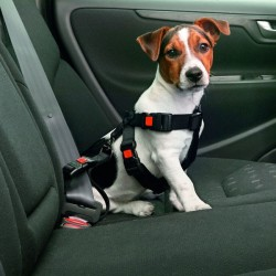 Harnais de sécurité pour chien en voiture