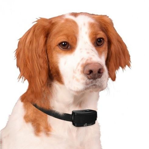 collier electronique pour chien anti aboiements avec. Black Bedroom Furniture Sets. Home Design Ideas